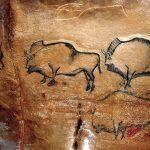 Bisontes de La Covaciella (España)