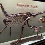 Skeleton of an early carnivorous dinosaur
